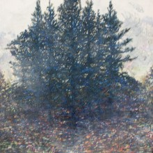 Port Orford Cedars, oil on canvas, 16 x 20, 2014